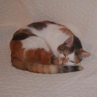 我が家の飼い猫「ミー」