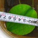 lotus20140620