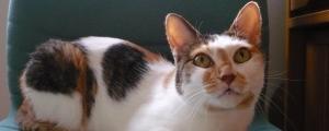 料理と猫とインテリアのイメージ